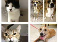 Marshall County Animal Shelter