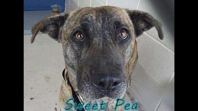 Oke - Sweet Pea