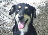 Donation 4 tumor surgery on Dog PEZI