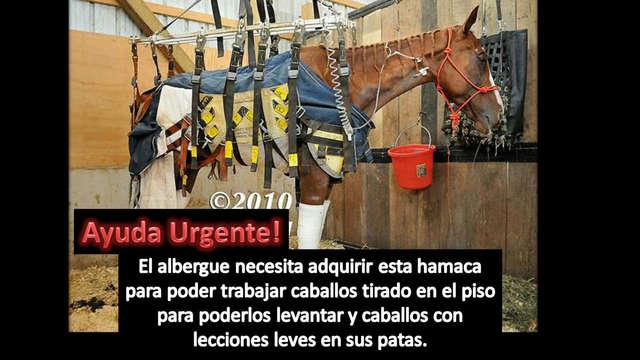 Ayuda para poder comprar una hamaca para caballos!