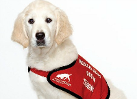A D.A.D. (Diabetic Alert Dog) for Avery