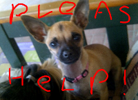 Please Help Save Chloe's Life