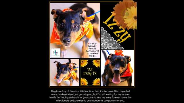 Izzy ID 19097915 IAS Urngent Animals Irving