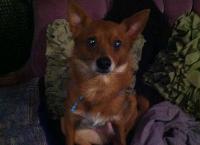 Our Furry Friend Ferbie needs surgery!