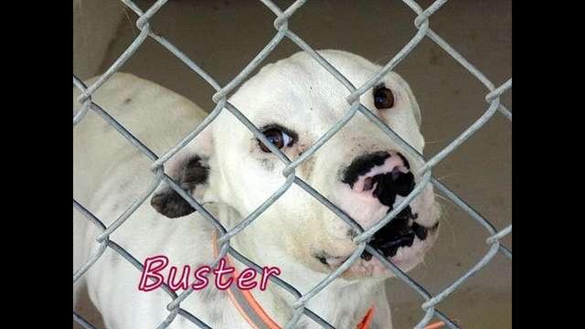 Oke-Buster