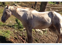 Pete, blind horse from cruelty case needs funds!