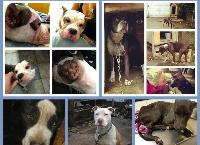 Bully Breed Rescue's Boarding and Medical Fund