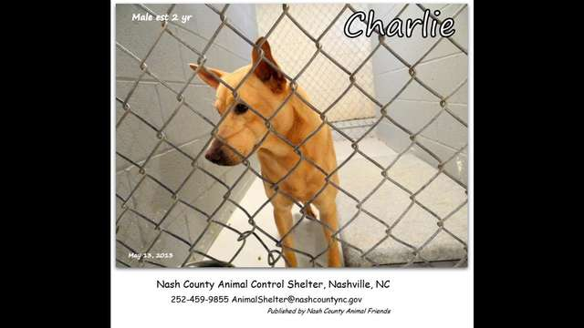 In Animal Control facility!  HELP us Save CHARLIE
