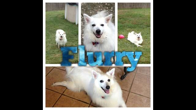 Please help Flurry go to rehab!