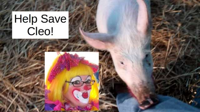 Save Cleo the Clown from having to kiss Piglet!