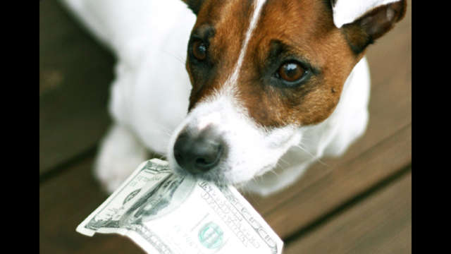 March Boarding Costs for Rescue Dogs