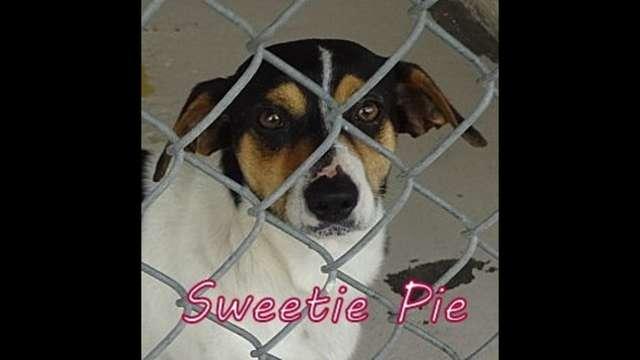 Oke-Sweetie Pie