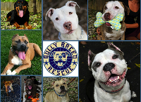 Bully Breed Rescue's Boarding & Vet Fund