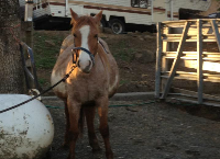 Foaling Fund - Fallon Feedlot Mares
