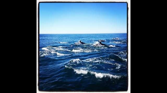 Help us dive! (yes - in the deep ocean!)