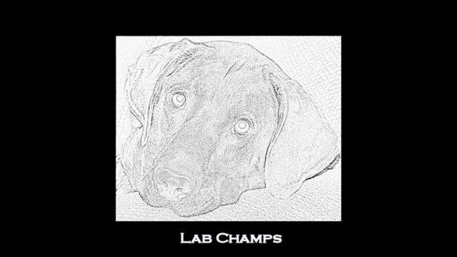Lab Champs