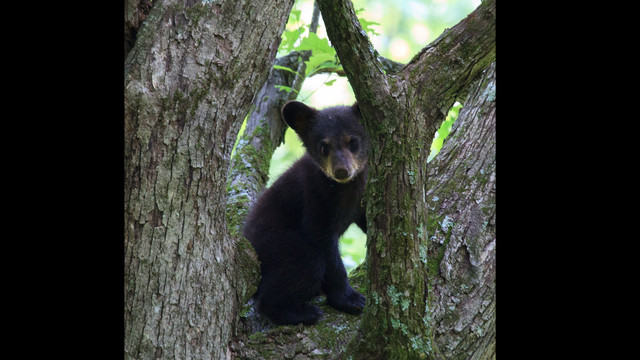 THE BLACK BEAR PROJECT DONATION PAGE