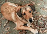 In Loving Memory of Bailey...