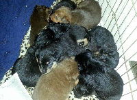 18 PUPS + 2 BABY MAMA'S RESCUED FROM UNDER HOUSE!