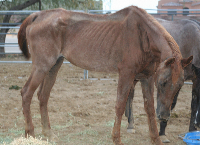 SAVE THE NEGLECTED HORSES