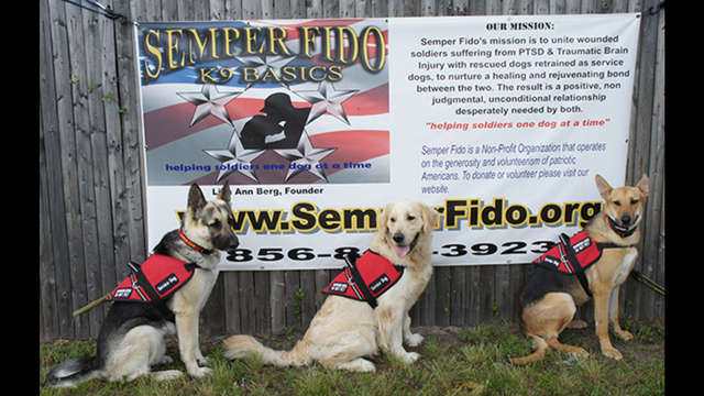 Semper Fido (K9 Basics)-Service Dogs For Veterans