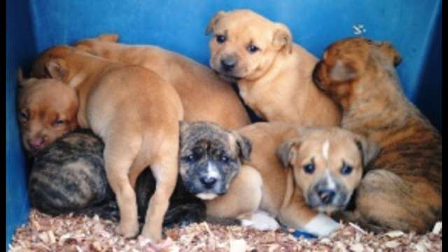 Help Save 19 Chester Co. puppies