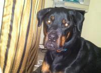 Lucky had TPLO surgery
