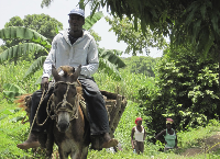 Agricultural Cooperatives in Haiti