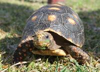 Osuna Turtle and Tortoise House