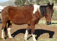 Change a Horses Life