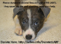Fundraiser for new ARF of MS shelter