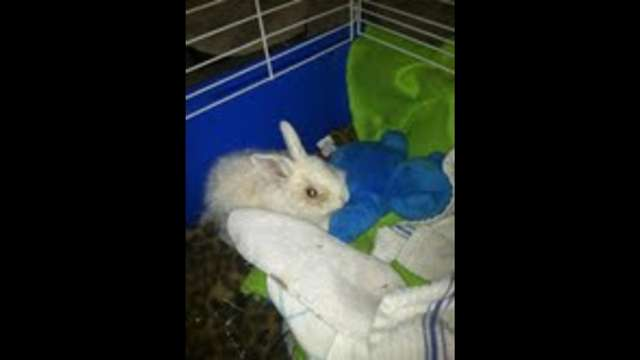 Ontario, California USA Rabbit Rescue