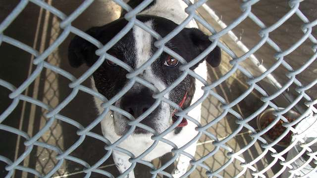 Save Pender County Animal Shelters homeless pets