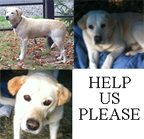 PLEASE HELP THESE LABS!!