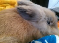 Help Save My Bunny!