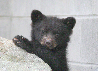 Bear Enclosure - Matching Funds