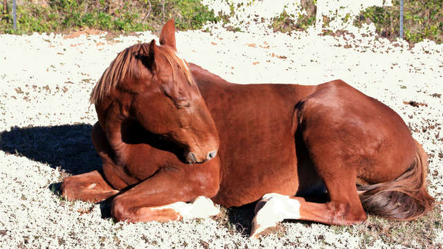 ReHab Neglected & Abused Horses