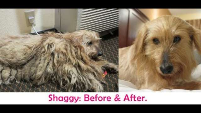 Shaggy - the 3 Fountains Dog - Rescue & Vetting