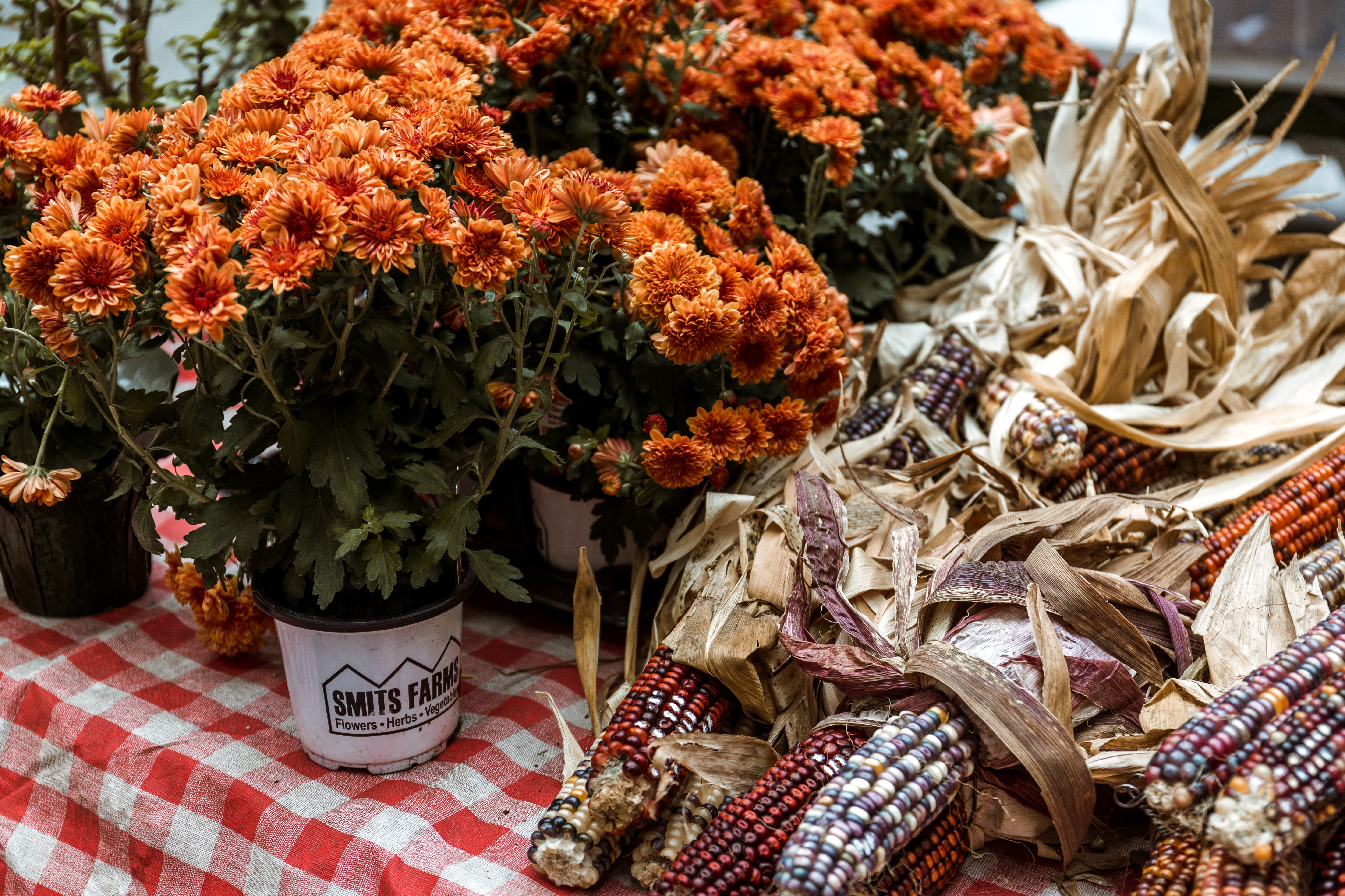 Fabulous Flowers For Fall Color