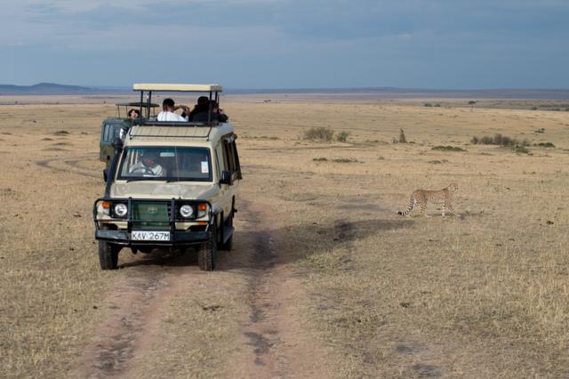 Safari cheetah Kenya