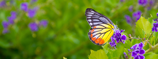 See the alpine butterflies in Yosemite National Park
