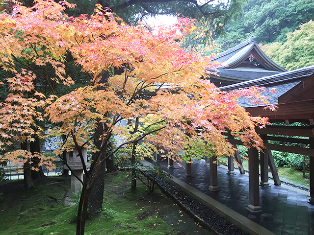 See fall foliage in Japan