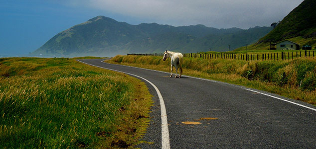 Horse in New Zealand_Staff Photo_640x300px