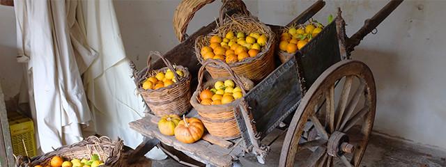 Lemons at Azienda Casabianca, Sicily