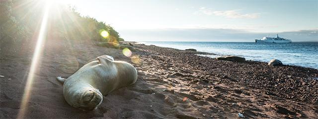 Seals-Rabida-Island-ecuador-galapagos