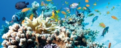 A look at Australia's Great Barrier Reef