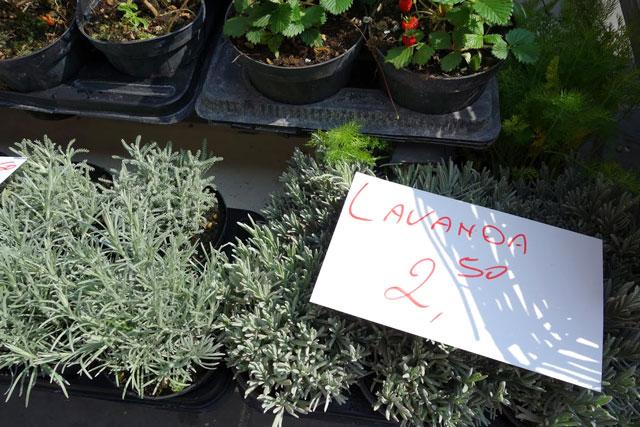 Italy farmers' market herbs