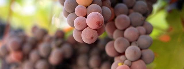 Grape Harvest Festival in Mendoza, Argentina