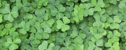 Clovers, pennies & bamboo: Lucky traditions around the world