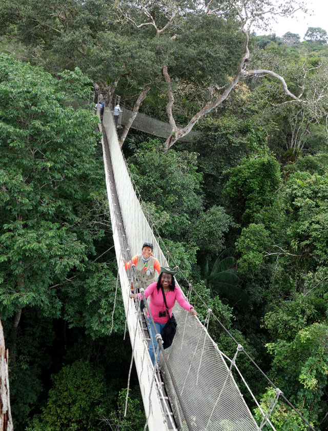 Canopy walk in the Amazon rainforest